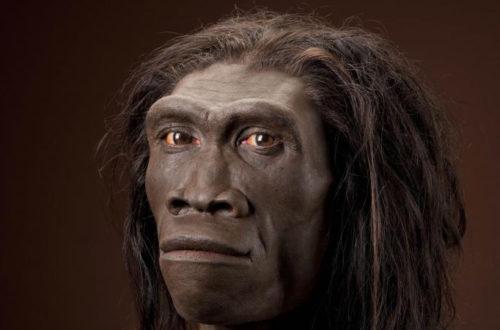 Article : Darwin, théorie de l'évolution et racisme : enquête du petit kettinois