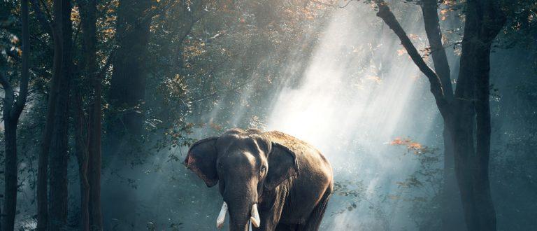 Article : Côte d'ivoire, l'extinction de la biodiversité en marche à grand pas